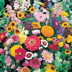 Lawn & Garden - Instant Roll Out Flower Garden