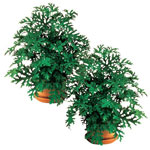 Lawn & Garden - Anti Mosquito Plants Set/2