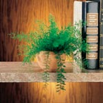 Lawn & Garden - Mysterious Air-Fern®