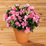 Artificial Azalea Potted  Bush