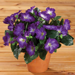 Lawn & Garden - Artificial Petunia Potted Bush