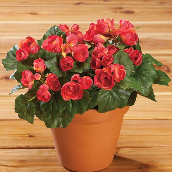 Begonia Bush by OakRidge™ Outdoor