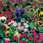Lawn & Garden - Shady Garden Garden Roll Out Flowers