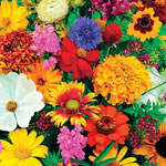 Outdoor Sale - Butterfly and Hummingbird Garden Roll Out Flowers