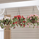 Outdoor Décor - Fully Assembled Geranium Hanging Basket by OakRidge Outdoor™