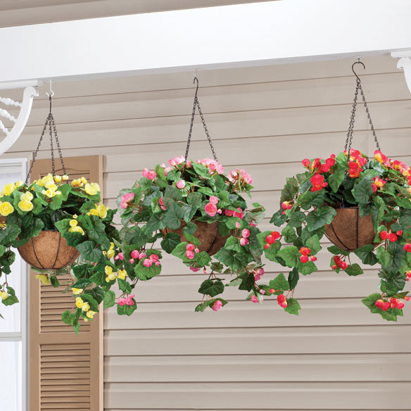 Fully Assembled Begonia Hanging Basket by OakRidge Outdoor™
