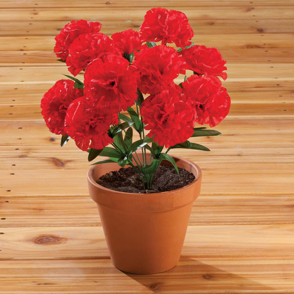 Carnation Bush by OakRidge™
