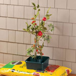New - Tomato Grow Pots, Set of 3