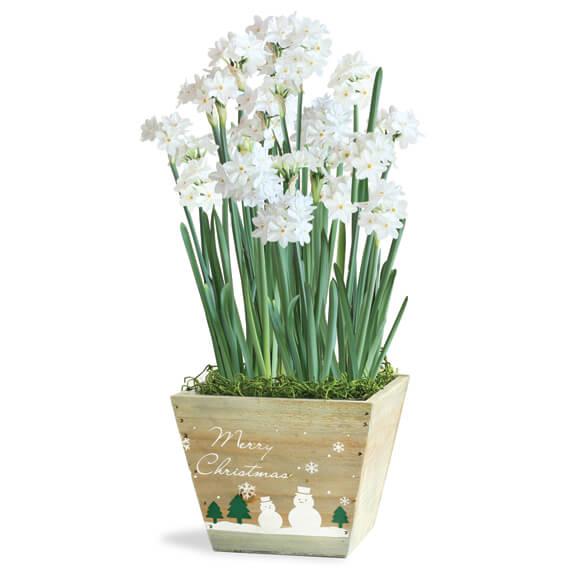 Flower Bulb Gift Baskets : Paperwhites gift basket flower bulbs paperwhite