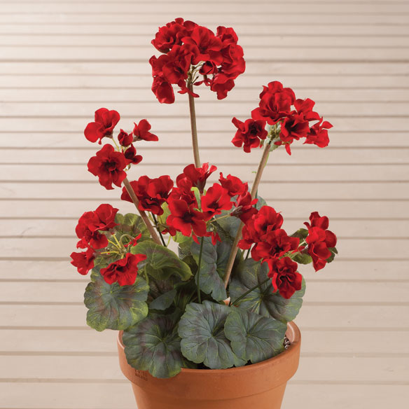 Geranium Bush by OakRidge™ - View 4