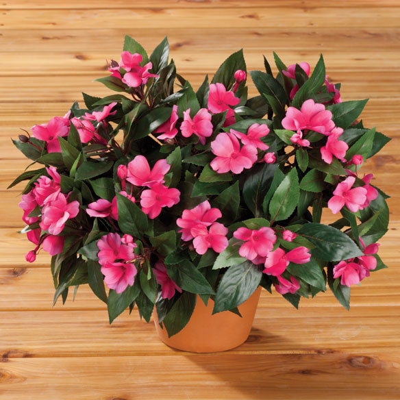 Impatiens Bush by OakRidge™ Outdoor - View 2