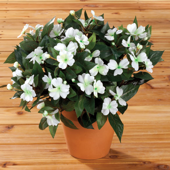 Impatiens Bush by OakRidge™ Outdoor - View 3