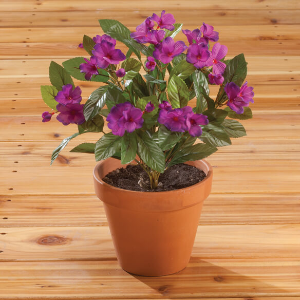 Impatiens Bush by OakRidge™ Outdoor - View 4
