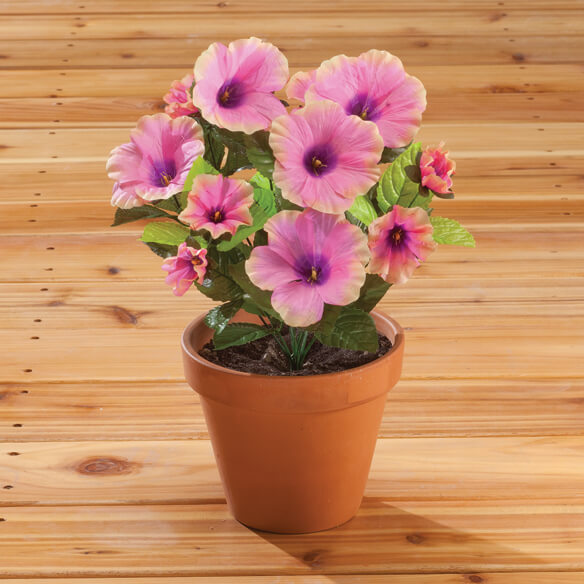 Petunia Bush by OakRidge™ Outdoor - View 4