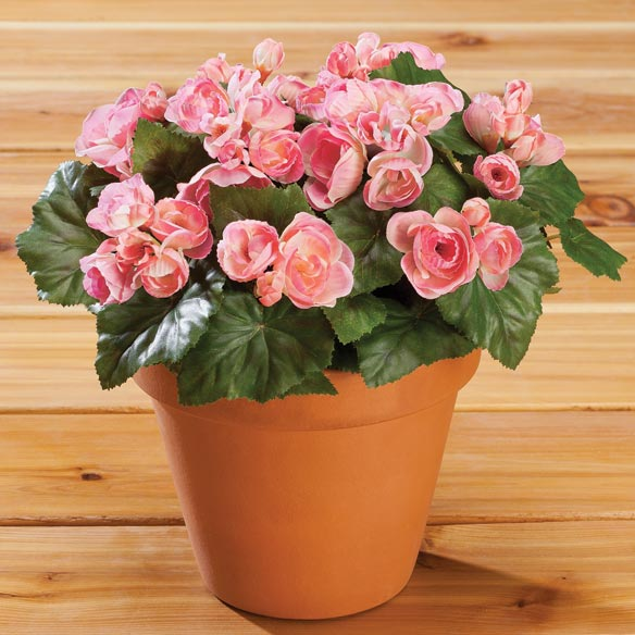 Begonia Bush by OakRidge™ Outdoor - View 3