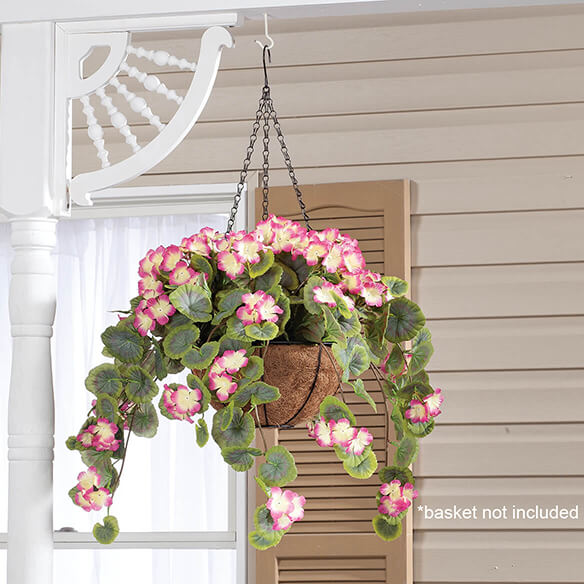 Geranium Hanging Stem by OakRidge™ - View 2