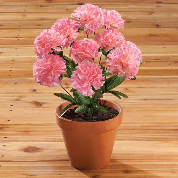 Carnation Bush by OakRidge™ - View 4